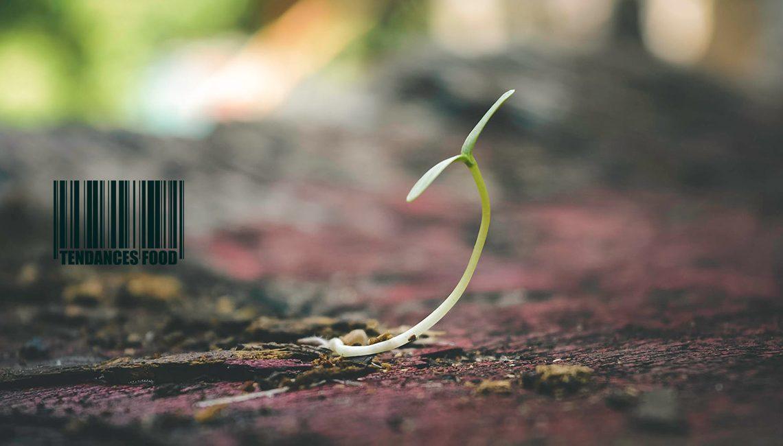 Semences agricoles : Quelle est l'origine de notre alimentation ?